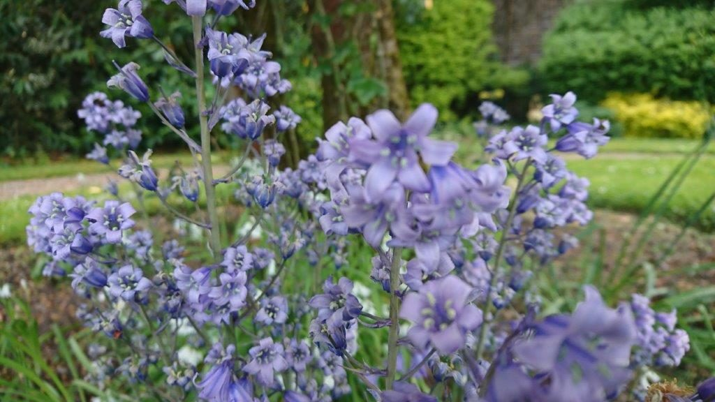 Leixlip Manor Garden Kildare Purple Flowers