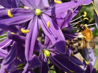Flowers and Bees at Leixlip Manor